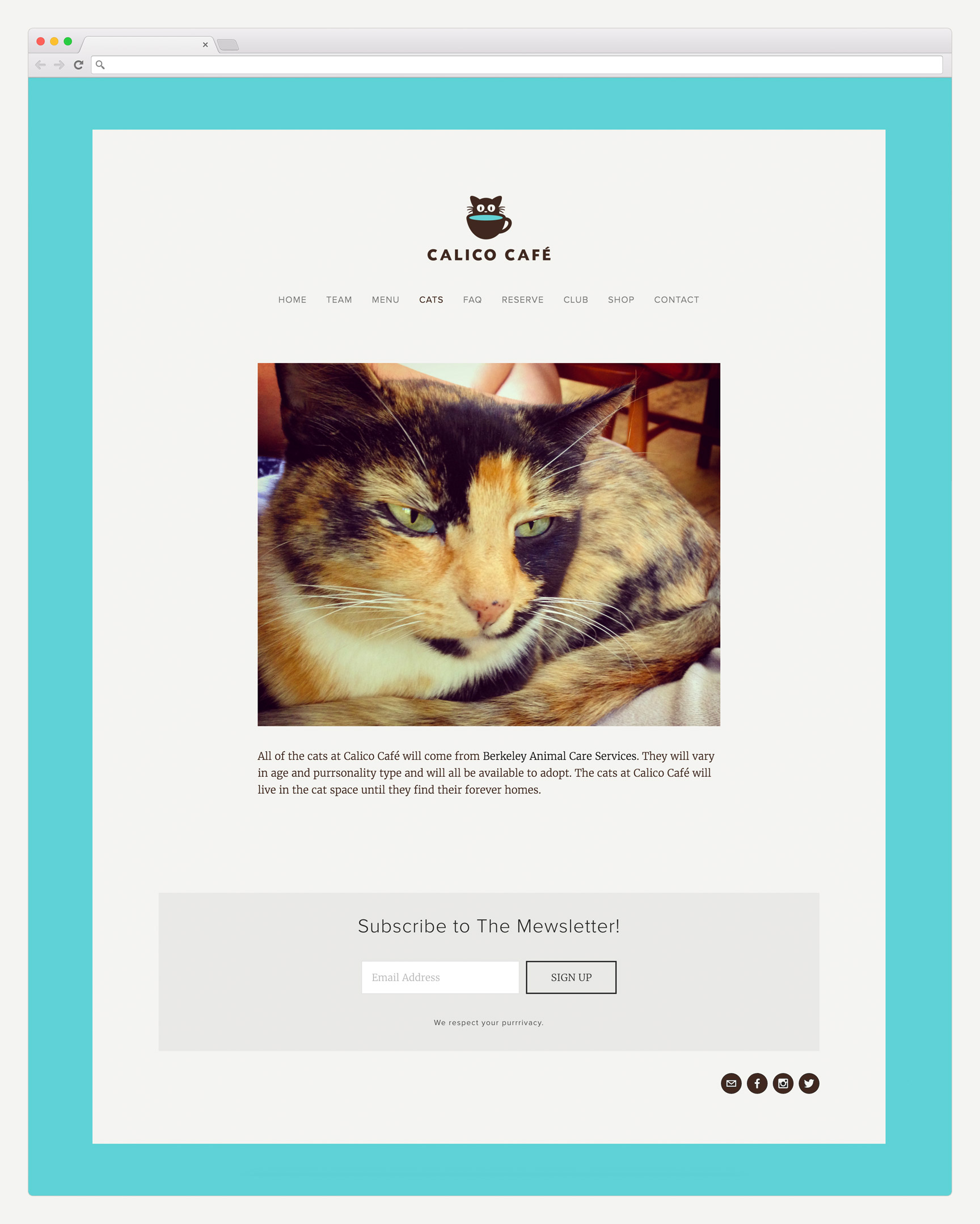 Calico Cafe Website Design